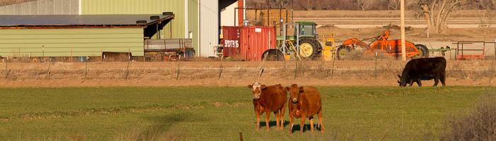Winter wheat, San Antonio NM, March 1, 2010