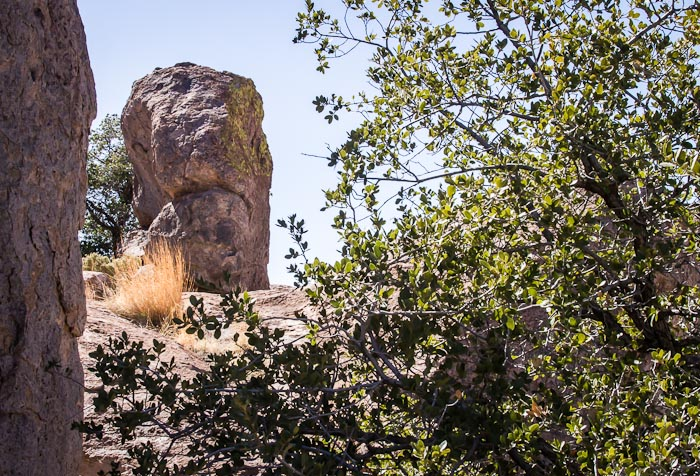 Grumpy, City of Rocks State Park, Faywood NM, March 6, 2012