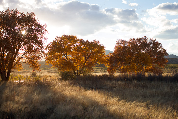 Afternoon, Bosque del Apache National Wildlife Refuge, San Antonio NM, November 9, 2012