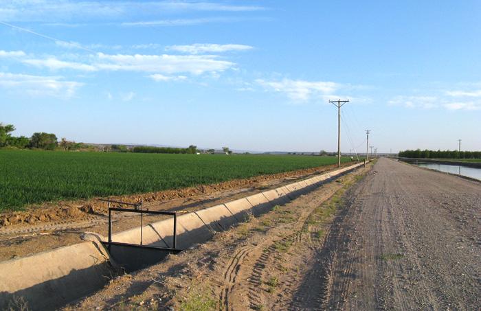 Onions, Arrey NM, April 26, 2008