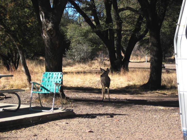 Deer at Davis Mountains State Park, Fort Davis TX, January 12, 2008