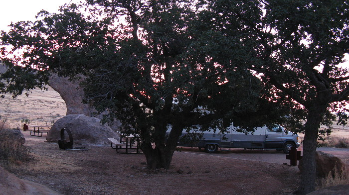 Emory oaks at dawn, Site 12, City of Rocks State Park, Faywood NM, March 14, 2009